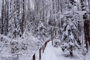 bialowieza-winter-900